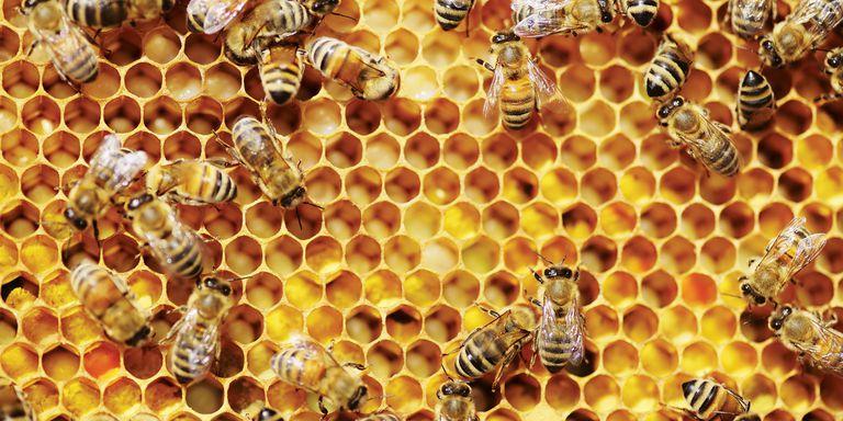10 Amazing Skin, Health and Hair Benefits of Honey